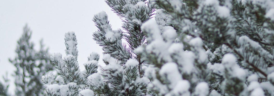 It's Snowing at Winter Wonder…